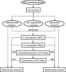 Dubia Roach Growth Chart Flow Chart Visualizing The Sequence Of Experiments The