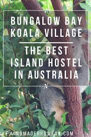 bungalow bay koala village best island hostel in bungalow bay koala village best island hostel in