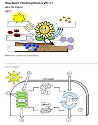 42 Circumstantial Photosynthesis Worksheet Answers