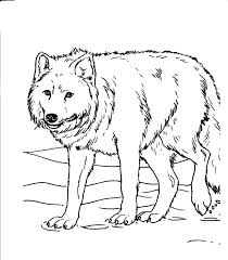 Realistic Animal Coloring Pages Forest Animal Coloring Pages