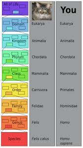 Carolus Linnaeus Classification Taxonomy Contributions
