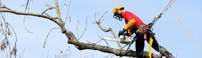 Tree Removal Anaheim CA