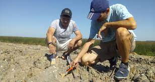 Hallaron en San Pedro restos de una playa marina de cinco mil años de  antigüedad – El Santafesino