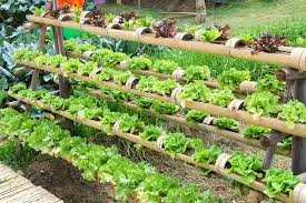 you don t need a large garden to grow your fresh produce nor do you need years of experience to build your own diy indoor grow system