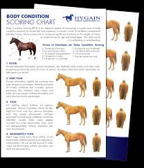 Miniature Horse Weight Chart Body Condition Scoring Your Horse Hygain Horse Feed