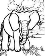 1000 plus free coloring pages for kids including disney movie coloring pictures and kids favorite cartoon characters. Free Printable Coloring Pages For Kids Kid Safe
