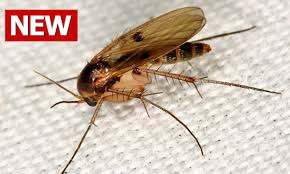 How to Get Rid of Gnats, How to Kill Gnats, How Do You Get Rid of ...
