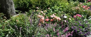 perennial flowers for your nj garden