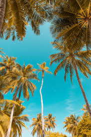 , palm trees iphone wallpaper ipod wallpaper hd free download 360×640. Palm Tree Iphone Wallpapers On Wallpaperdog