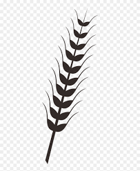 rice plant drawing.  Plant Wheat Rice Drawing Clip Art  Plants Png For Plant U