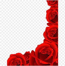 rose flowers images hd png image with
