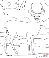 Small Picture Mule Deer coloring page Free Printable Coloring Pages
