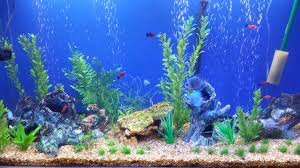 Funny Fish Tank Decorations 50 Best Aquarium Backgrounds To Download Print Free Premium