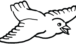 Bird Coloring Pages Printable Interesting Printable Pictures Of