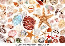 Large Seashell Collection