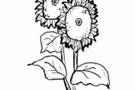 Fiori Belli E Facili Da Disegnare Powermall