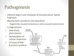 mycelial form ppt histoplasma capsulatum and histoplasmosis powerpoint