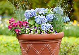 99 Best Container Gardening Images On Pinterest  Garden Planters Container Garden Plans Flowers