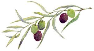 Image result for clipart of olive branch