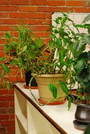 best office plants good plants for the office environment gardening know how best office plant no sunlight