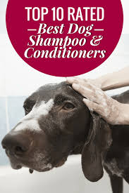 a round up of 10 of the best dog shampoo and conditioners available on the