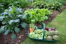 best soil for vegetable garden. best soil for gardening stunning vegetables garden . vegetable d