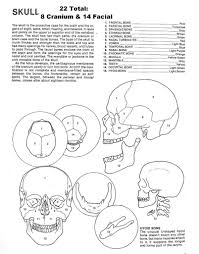Small Picture Hyoid Bone Coloring PageBonePrintable Coloring Pages Free Download