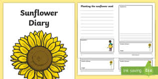 Sunflower Growing Chart Growth Worksheets Primary Resources Growth Chart Growing