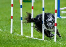 kim seiter dog agility