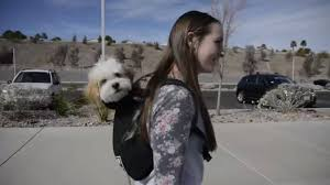 The Best <b>Backpack Dog Carrier</b> in the World | K9 Sport Sack - <b>Pet</b> ...