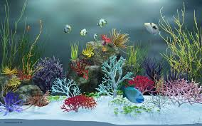 Top Collection of Fish Tank Wallpapers: 4611674 Fish Tank Background  1920x1200 px - HD Wallpapers