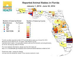 rabies vaccines and microchipping peggy adams palm beach county puppy tests positive for rabies