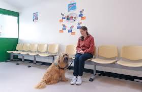 <b>Cat & Dog</b> Waiting Areas | Gower Vets