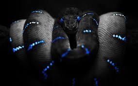 blue enigma inspirefirst