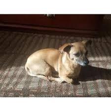 gretel lost female dog tucson az