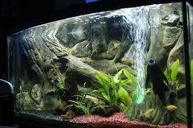 diy aquarium backgrounds uk clublilobal
