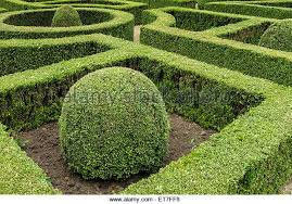Image result for box hedging photos