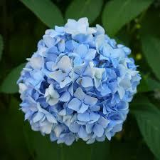 Light Blue Flower Names Light Blue Flowers Fashion Dresses