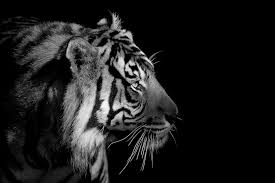 background images animals. Plain Background For Background Images Animals H