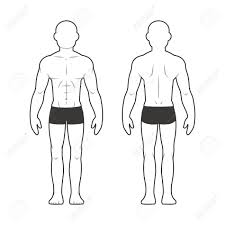 Athletic Male Body Chart Muscular Man Silhouette From Front