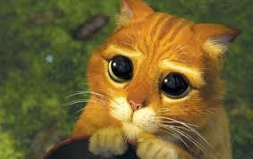 """Résultat de recherche d'images pour """"yeux de chat"""""""