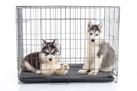 Kong Crate Size Chart Kong Dog Crate Review 2019 Best Dog Crates And Beds