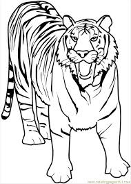 Small Picture Tiger Animal Coloring Pages Free Printable Animal Coloring Pages