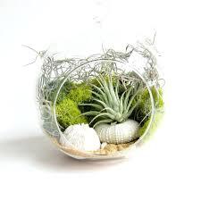 air plant terrarium diy diy air plant terrarium kit
