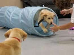 tasha at puppy kindergarten