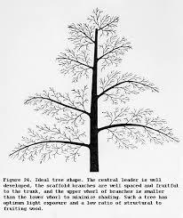 Fruit Trees  ShapesFruit Tree Shapes