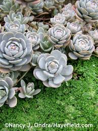 Small Picture 38 best Groundcovers images on Pinterest Garden ideas Garden