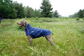 Chilly Dog Coats Sweater Size Chart Cooling Vest Black