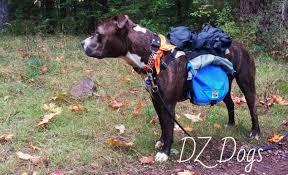 groundbird gear dog backpack