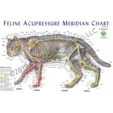 Canine Acupuncture Meridian Chart Feline Acupressure Meridian Chart Poster Laminated